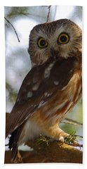 Northern Saw-whet Owl II Beach Towel