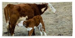 Nursing Calf Beach Sheet
