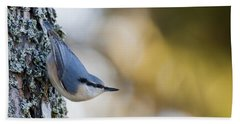 Nuthatch In The Classical Position Beach Towel