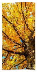 Beach Towel featuring the photograph Oak In The Fall by Mike Ste Marie