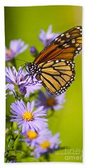 Old Butterfly On Aster Flower Beach Towel