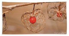 Old Chinese Lantern Pod Art Prints Beach Sheet