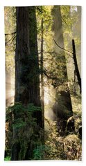 Old Growth Forest Light Beach Towel
