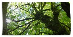 Old Growth Tree In Forest Beach Towel