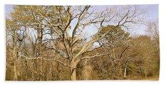 Old Haunted Tree Beach Sheet by Amazing Photographs AKA Christian Wilson