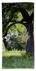 Old Texas Oak Tree Beach Sheet by Connie Fox