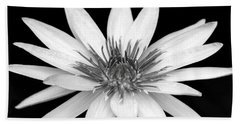 One Black And White Water Lily Beach Towel