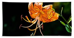 Orange Lily - Lilium Kelleyanum Beach Sheet