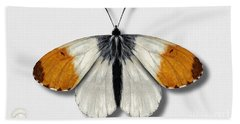 Orange Tip Butterfly - Anthocharis Cardamines Naturalistic Painting - Nettersheim Eifel Beach Sheet