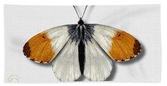 Orange Tip Butterfly - Anthocharis Cardamines Naturalistic Painting - Nettersheim Eifel Beach Towel