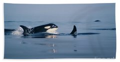 Beach Towel featuring the photograph Orcas Off The San Juan Islands Washington  1986 by California Views Mr Pat Hathaway Archives