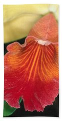 Orchid 16 Beach Sheet
