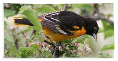 Oriole With Apple Blossoms Beach Towel