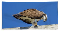 Beach Towel featuring the photograph Osprey Eating Lunch by Dale Powell