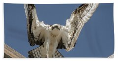 Beach Towel featuring the photograph Osprey Landing by Dale Powell