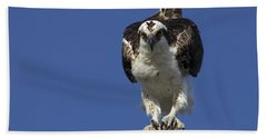 Osprey Photo Beach Towel