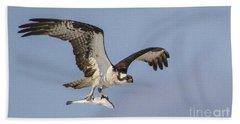 Osprey With Dinner Beach Sheet