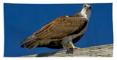 Beach Towel featuring the photograph Osprey With Fish In Talons by Dale Powell