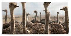 Ostrich Heads Beach Sheet by Johan Swanepoel