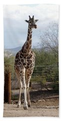 Out Of Africa  Giraffe 1 Beach Towel