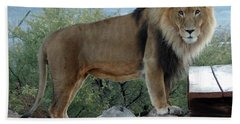 Out Of Africa  Lion 1 Beach Towel