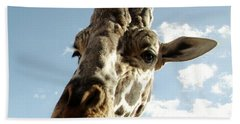 Out Of Africa  Reticulated Giraffe Beach Towel