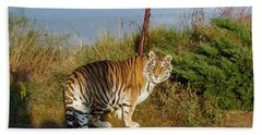 Out Of Africa  Tiger 1 Beach Sheet