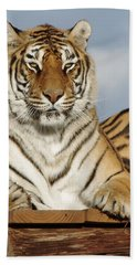 Out Of Africa Tiger 4 Beach Towel