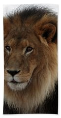 Out Ofafrica  Lion 4 Beach Towel