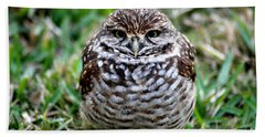 Owl. Best Photo Beach Towel by Oksana Semenchenko