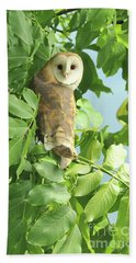 Beach Towel featuring the photograph owl by Rod Wiens