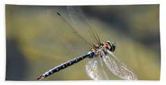 Beach Towel featuring the photograph Paddletail Darner In Flight by Vivian Christopher