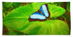 Painted Blue Morpho Beach Sheet by Teresa Zieba