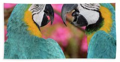 Pair Of Blue And Gold Macaws Engaged Beach Towel