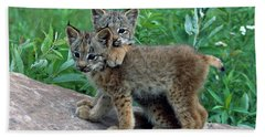 Pair Of Lynx Kittens Playing On Rock Beach Towel
