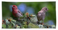 Pair Of Purple Finches Beach Towel