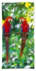 Pair Of Scarlet Macaws Beach Towel