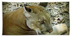 Panther Beach Sheet by Debra Forand