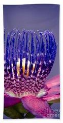 Passiflora Alata - Ruby Star - Ouvaca - Fragrant Granadilla -  Winged-stem Passion Flower Beach Towel