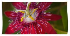 Beach Towel featuring the photograph Passion Flower by Jane Luxton