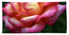Passionate Shades Of A Perfect Rose Beach Towel
