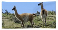 Patagonian Guanacos Beach Towel by Michele Burgess