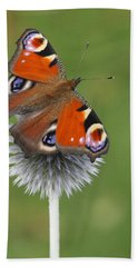 Peacock Butterfly Netherlands Beach Towel