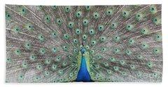 Peacock Beach Sheet by John Telfer