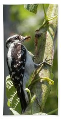 Peanut Butter Loving Red Caucated Woodpecker Beach Towel by Belinda Lee