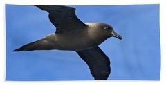Pelagic Seabird... Beach Sheet by Nina Stavlund