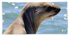 Pensive Sea Lion  Beach Towel