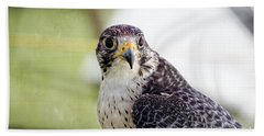 Peregrine Falcon Bird Of Prey Beach Sheet by Eleanor Abramson