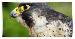 Peregrine Falcon Beach Towel by Cynthia Guinn
