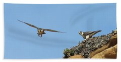 Peregrine Falcons - 1 Beach Sheet